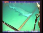Sharks v. Internet : Watch Sharks Chew On Underwater Internet Cables [VIDEO]