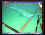 Sharks v. Internet : Watch Sharks Chew On Underwater Internet Cables[VIDEO]